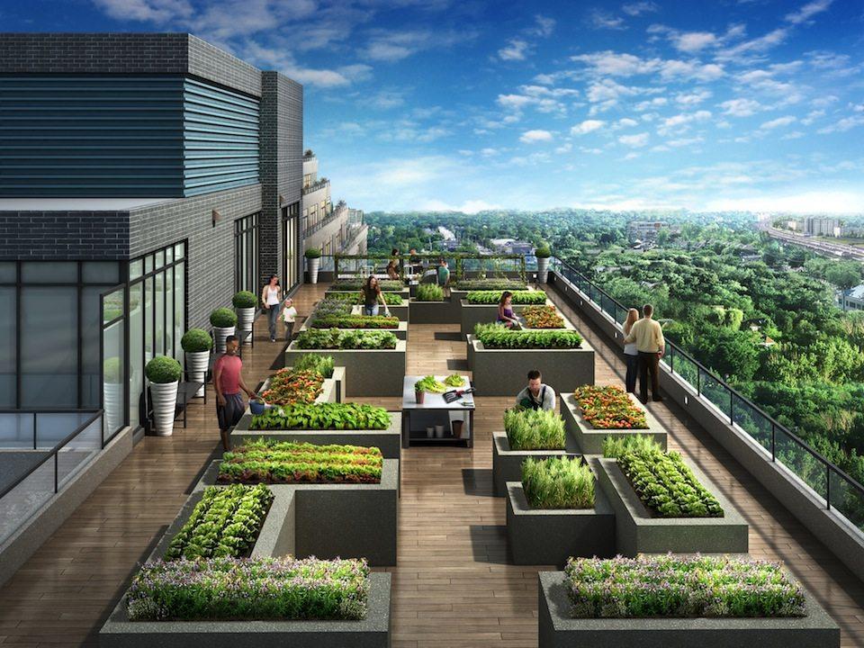 NY2 Condominiums Condos Terrace View Toronto, Canada